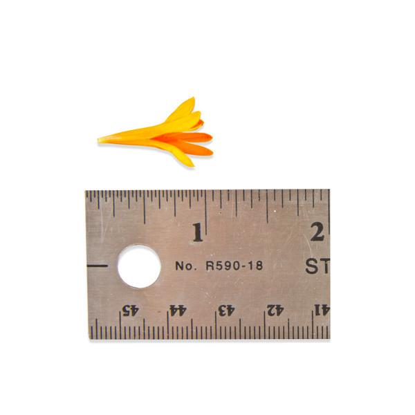 Fresh Micro Marigold Florets-3