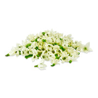 Fresh Micro Pepper Flower White-1
