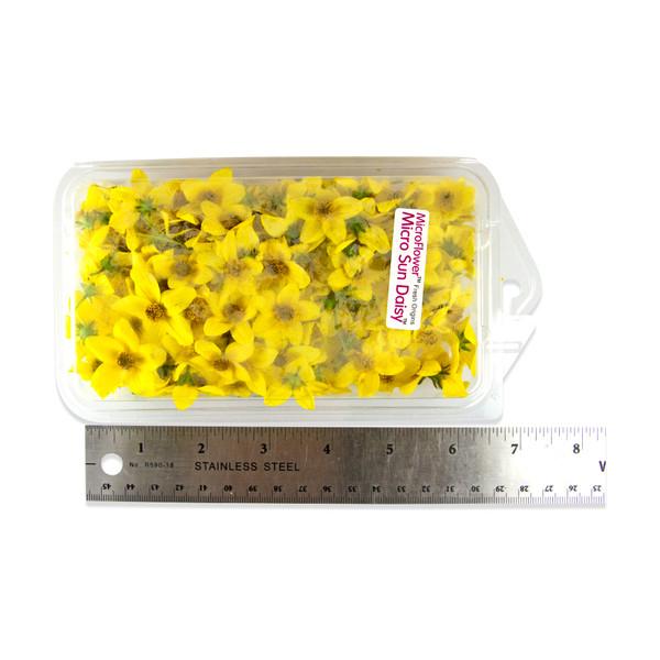 Fresh Micro Sun Daisy™-2