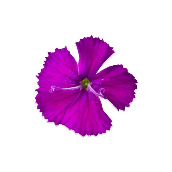 Fresh Micro Flowers Blend-3