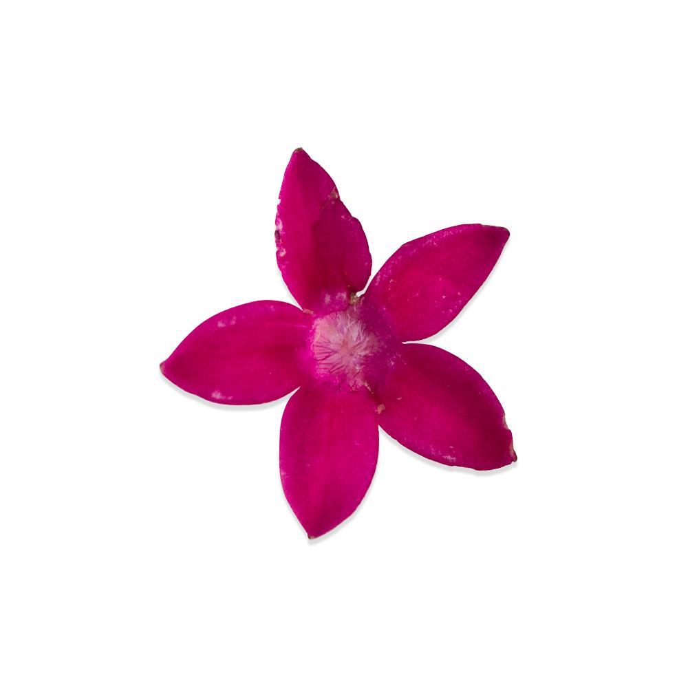 Fresh Micro Flowers Blend-4