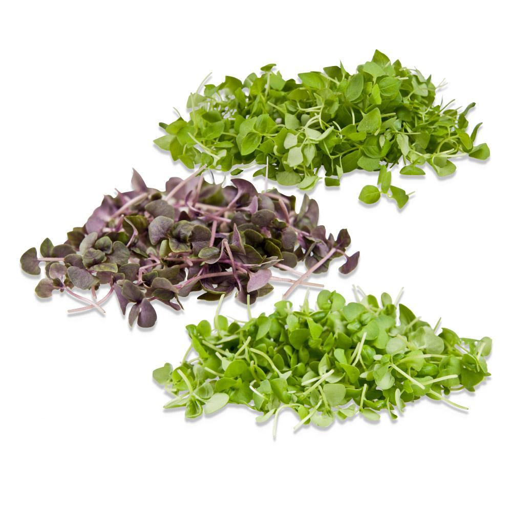 Microgreen Samplers