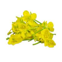 Fresh Mustard Flowers