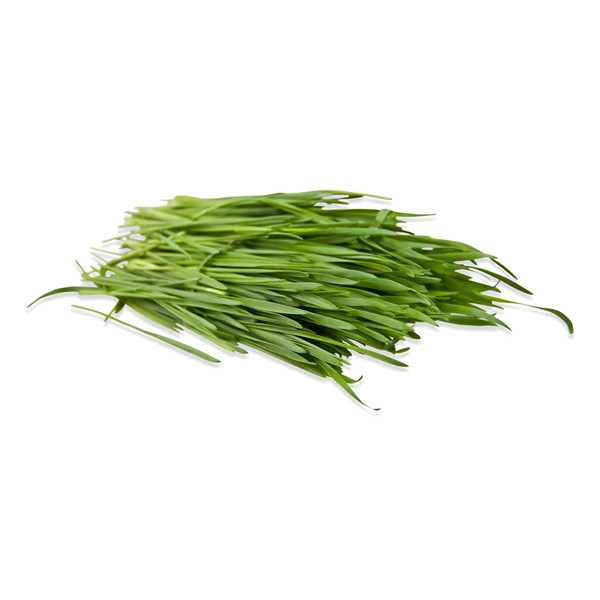 Fresh Wheatgrass-1