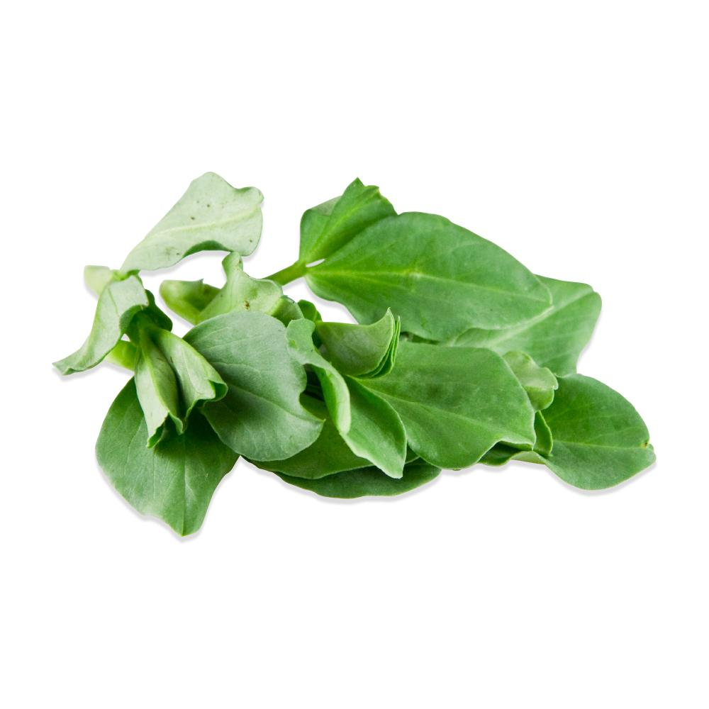 Petite Fava Leaf