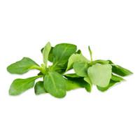 Petite Stevia