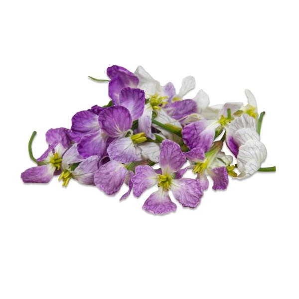 Fresh Radish Flower-2