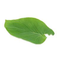 Rootbeer Leaf-1