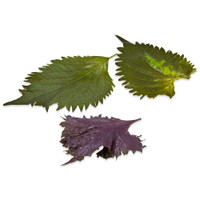 Shiso Leaves - 2 green leaves & 1 purple leaf with jagged edge