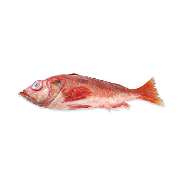 Whole Rockfish (aka Red Snapper)