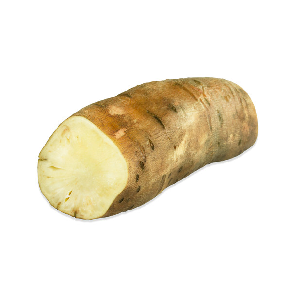 White Yacon Root