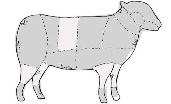 sectioned pig drawing