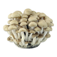 Fresh Organic White Beech Mushrooms
