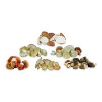 Fresh Wild Mushroom Sampler