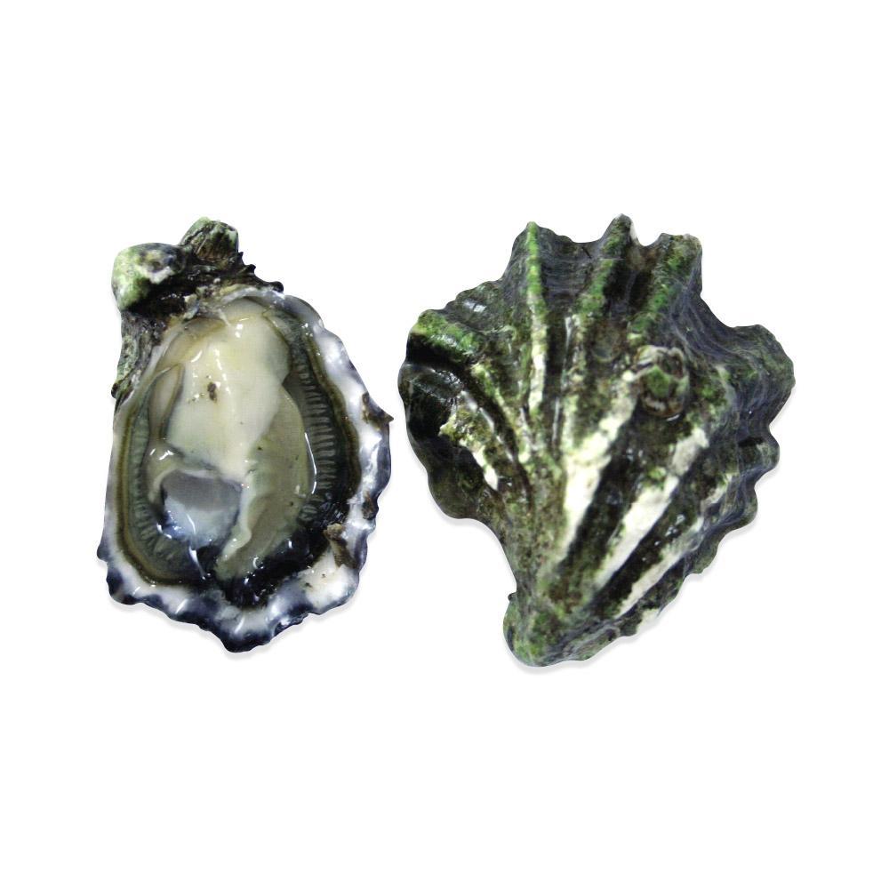 Live Kumamoto Oysters