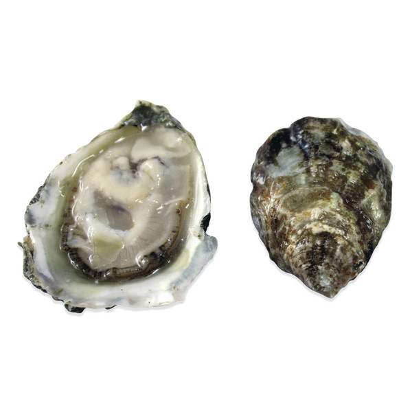 Olympia Oysters Shipped Overnight | Marx Foods