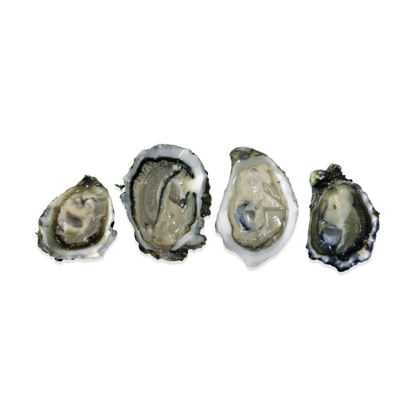 Pacific Oyster Sampler