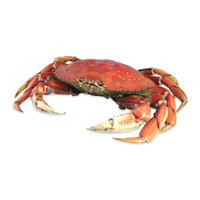 Whole Cooked Dungeness Crabs