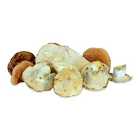 Fresh Wild Hedgehog Mushrooms